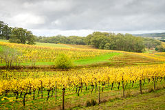 Vigna variopinta in autunno Fotografia Stock