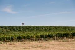 Vigna vicino al piccoli villaggio, cielo blu, agricoltura e vino Fotografie Stock Libere da Diritti