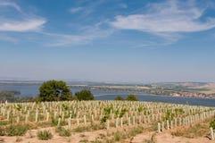 Vigna vicino al piccoli villaggio, cielo blu, agricoltura e vino Fotografia Stock Libera da Diritti