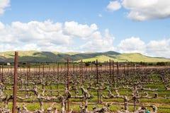 Vigna vicino a Livermore con le colline di California nei precedenti al crepuscolo immagine stock libera da diritti