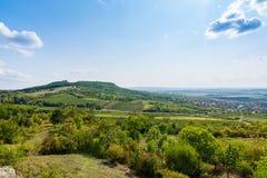 Vigna vicino a Palava, al parco nazionale ceco, all'agricoltura del vino ed all'agricoltura, paesaggio di estate, cielo blu della Fotografia Stock