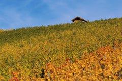 vigne Photographie stock libre de droits