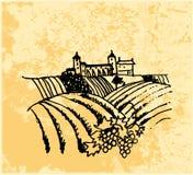 Vigne Illustration de Vecteur