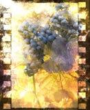 vigne Images stock