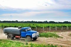 vigne Agricoltura in Taman Fotografia Stock