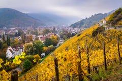 Vigne in autunno, Thann, Francia dell'Alsazia Fotografia Stock Libera da Diritti