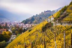 Vigne in autunno, Thann, Francia dell'Alsazia Immagine Stock