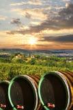 Vigne avec des barells de vin dans Chianti, Toscane image stock