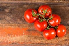 Vigne avec les tomates mûres rouges de la serre chaude néerlandaise Images libres de droits