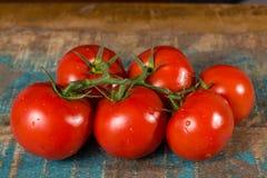 Vigne avec les tomates mûres rouges de la serre chaude néerlandaise Photos libres de droits