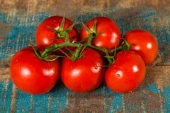 Vigne avec les tomates mûres rouges de la serre chaude néerlandaise Image stock