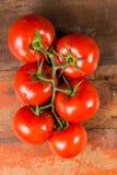 Vigne avec les tomates mûres rouges de la serre chaude néerlandaise Photo libre de droits