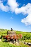Vigne, Borgogna, Francia Fotografia Stock