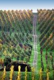 vigne colorée de chemin Images libres de droits