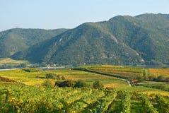 Vigne colorée en Autriche Images stock