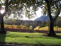 Vigne Constantia d'Autumncape Photographie stock