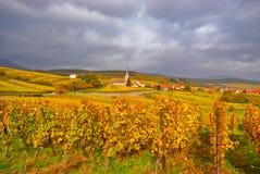 vigne d'automne Photos libres de droits