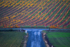 Vigne d'automne, route bleue Images stock