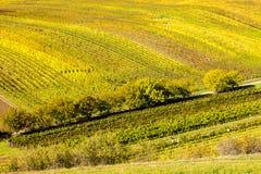 Vigne d'autunno Fotografia Stock Libera da Diritti