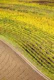Vigne d'autunno Fotografia Stock