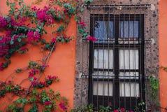 Vigne d'hublot, de mur et de bouganvillée au Mexique Photos stock