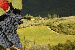 Vigne dans Chianti, Italie photographie stock