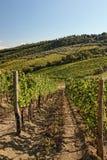 Vigne dans Chianti, Toscane, Italie photos stock