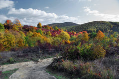 Vigne dans l'automne photographie stock