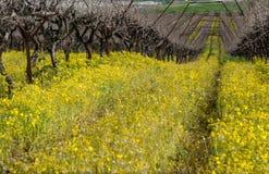 Vigne dans l'automne et les signes de la source Photographie stock