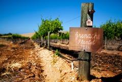 Vigne de Barossa de cru Images libres de droits