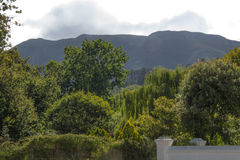Vigne de Groot Constantia image libre de droits