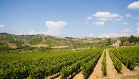 Vigne de la Toscane photos libres de droits