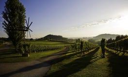 Vigne de la Toscane Photographie stock