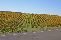 Vigne de Napa en automne Photo stock