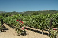 Vigne de Napa Valley Photographie stock libre de droits