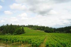 Vigne de source en Californie Photo libre de droits