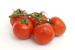 Vigne de tomate Photo libre de droits