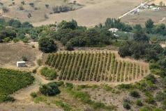 vigne de vue de la plantation s Espagne d'oeil d'oiseau Photos stock