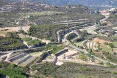 Vigne del Cipro Immagini Stock