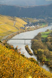 Vigne della Mosella del fiume Fotografie Stock