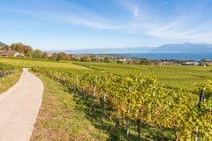 Vigne della regione di Lavaux sopra il lago Lemano & x28; lago di Geneva& x29; Fotografia Stock Libera da Diritti