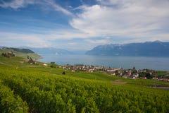 Vigne della regione di Lavaux, Svizzera Immagine Stock Libera da Diritti