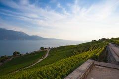 Vigne della regione di Lavaux, Svizzera Fotografia Stock Libera da Diritti
