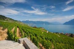 Vigne della regione di Lavaux, Svizzera Immagini Stock Libere da Diritti