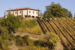 Vigne della Toscana Fotografia Stock Libera da Diritti