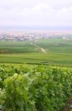 Vigne Dewy in Francia Fotografia Stock