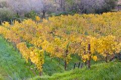 Vigne di autunno in Banyalbufar, Maiorca Immagine Stock Libera da Diritti