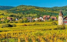 Vigne di autunno in Haut-Rhin - l'Alsazia, Francia fotografie stock libere da diritti