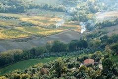 Vigne di autunno, Montepulciano, Italia immagini stock