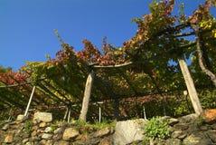 Vigne di Canavese - vicino al piccolo villaggio Cesnola, Italia Fotografia Stock Libera da Diritti